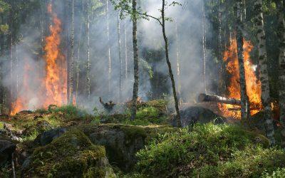 Por un verano sin más incendios forestales