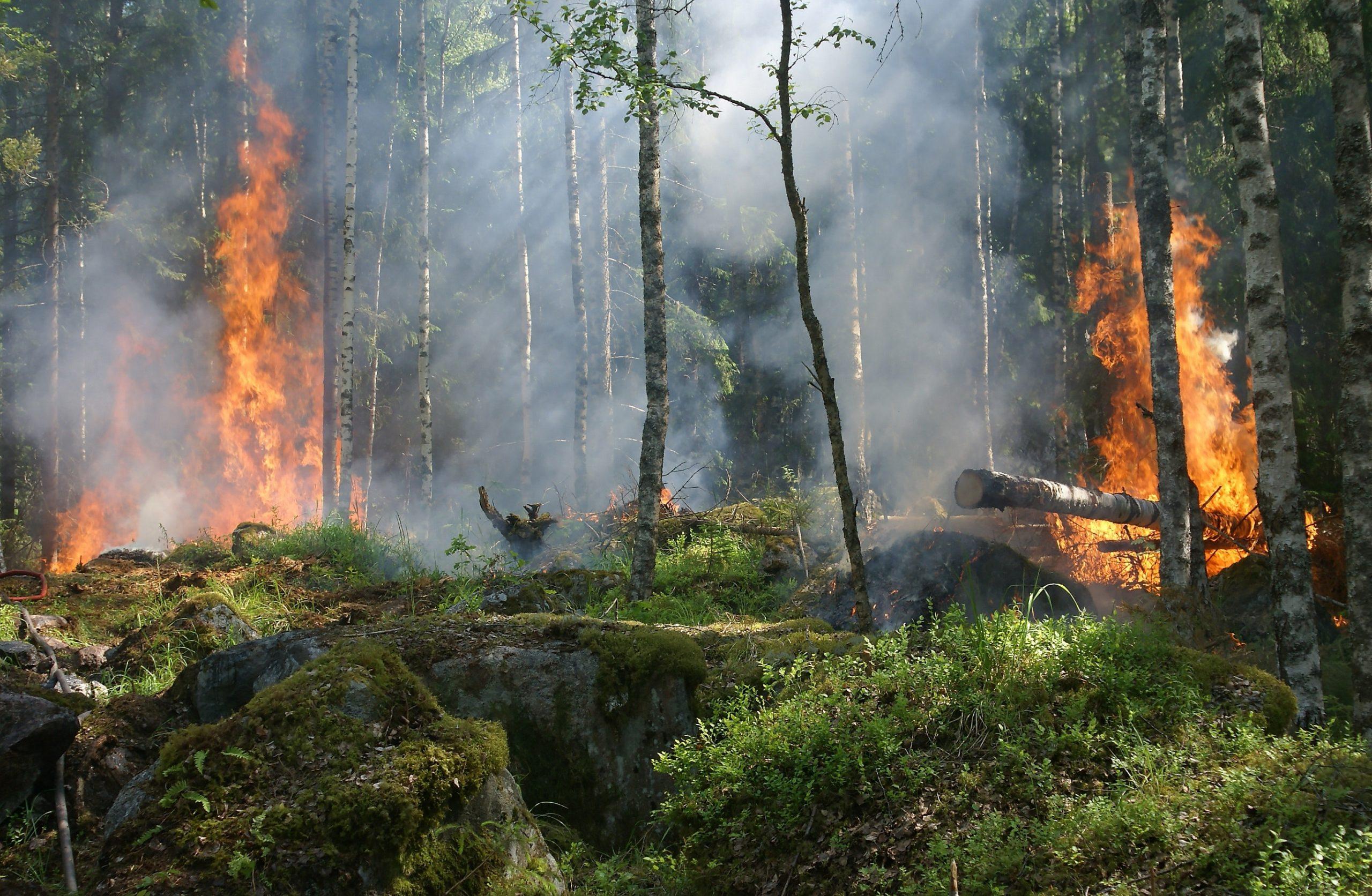 Un bosque ardiendo - Por un verano sin más incendios forestales - Drexmin